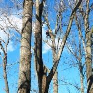 Likwidacja gniazd na drzewach