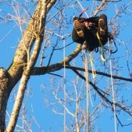 Usuwanie gniazd alpiniści