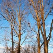 Usuwanie gniazd na drzewach
