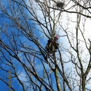 likwidacja-gniazd-ptakow-na-drzewie