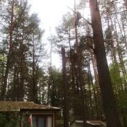 wycinanie drzew w sąsiedztwie zabudowań