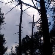 wycinka drzew w trudnych miejscach