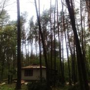 wycinka drzew blisko zabudowań