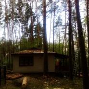 wycinka drzew w sąsiedztwie domu