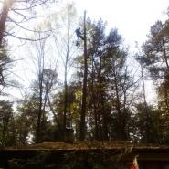 wycinanie drzew blisko zabudowań