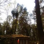 wycinanie drzew technikami alpinistycznymi