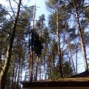 wycinka drzew technikami alpinistycznymi nad domami