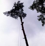 Prace na drzewach technikami alpinistycznymi