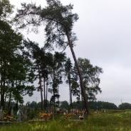 Wycinka drzew na terenie cmentarza