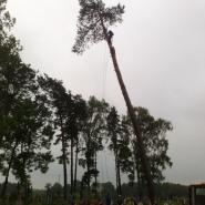 Prace na drzewach