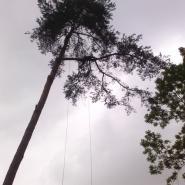 Wycinka drzew alpiniści